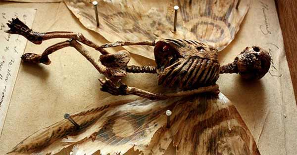 Les squelettes retrouvés dans cette cave de Londres sont flippants à souhait