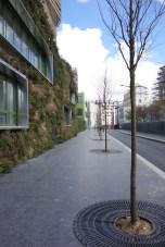 Les arbres de la rue Bernard Buffet ont été plantés !