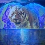 Show nocturno en Disney´s Animal Kingdom