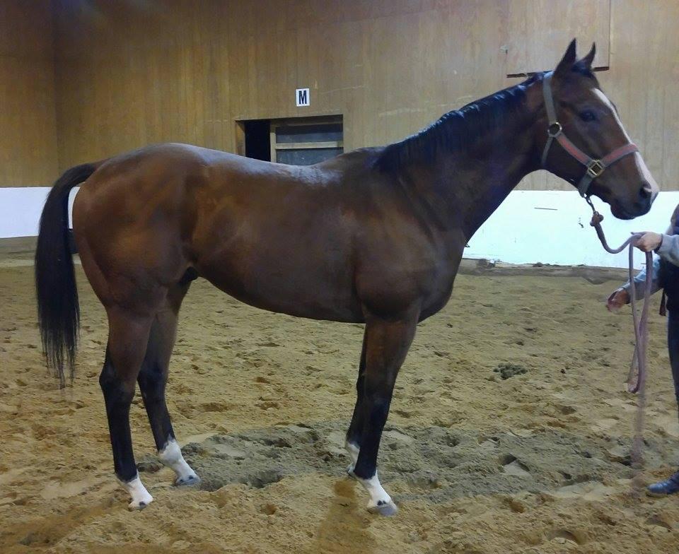 Put child up for adoption ontario equestrian