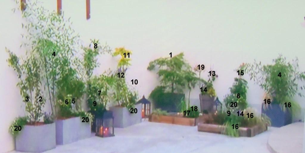 plan plantation jardin japonais