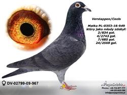DV-02799-09-967 MINI
