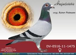 DV-0516-11-1475 MINI