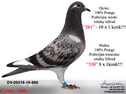 DV-06418-16-666 MINI