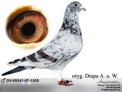 dv-09341-07-1555-mini