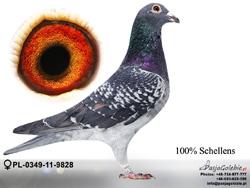 PL-0349-11-9828 MINI
