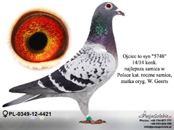 PL-0349-12-4421 MINI