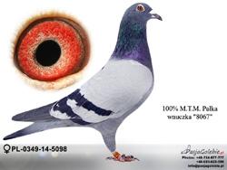 PL-0349-14-5098 MINI