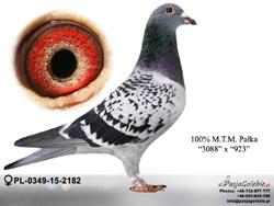 PL-0349-15-2182 MINI