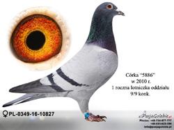 PL-0349-16-10827 MINI