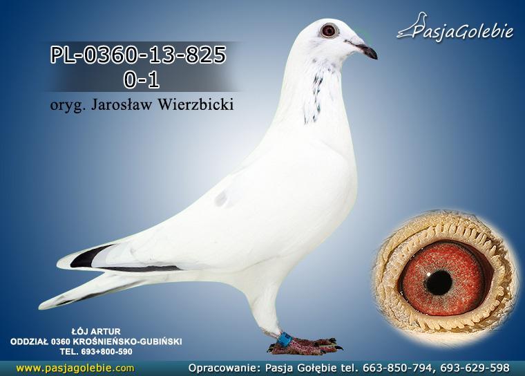 PL-0360-13-825
