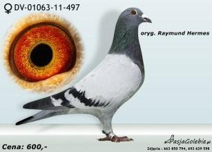 RODOWOD-DV-01063-11-497