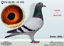 RODOWOD-DV-06381-10-359