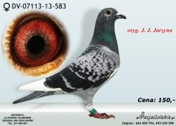DV-07113-13-583
