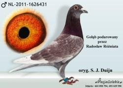 RODOWOD-NL-2011-1626431