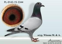 RODOWOD-PL-0143-15-3344