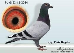 RODOWOD-PL-0153-15-2054