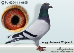RODOWOD-PL-0204-14-6605