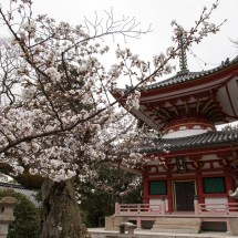 Passagem Gastronômica - Roteiro do Japão