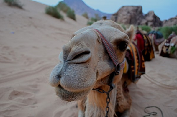 I found camels to be extremely photogenic and willing to pose with expressions that wise men copy!