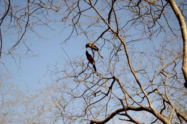 Romancing birds in Ranthambore... nature always delights