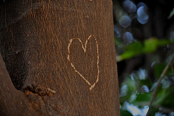Trees and monuments are regularly defaced. Saw this one in the Bird Sanctuary, Bharatpur. This isn't #FuelledByLove