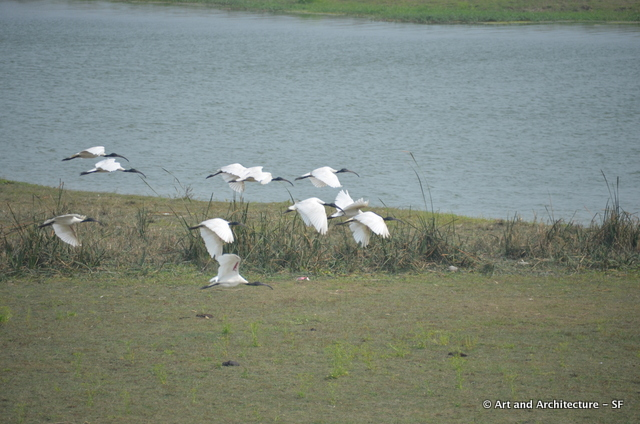 Birds on the Ganges