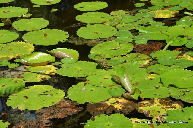 McKee Gardens Water Lilies