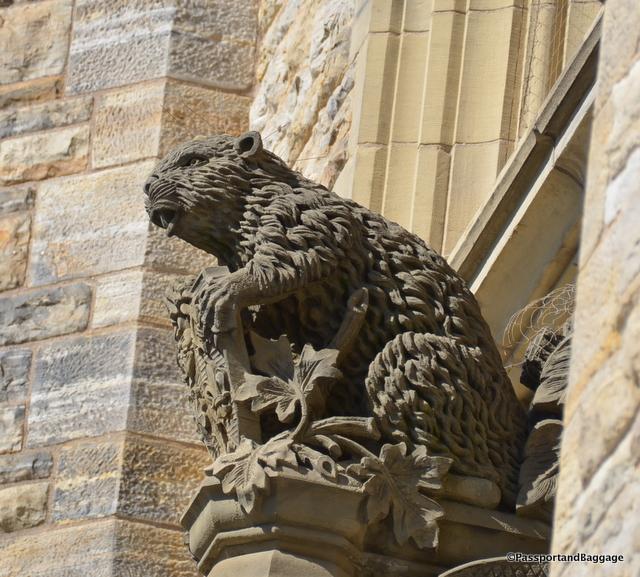 Parliamentary Beaver