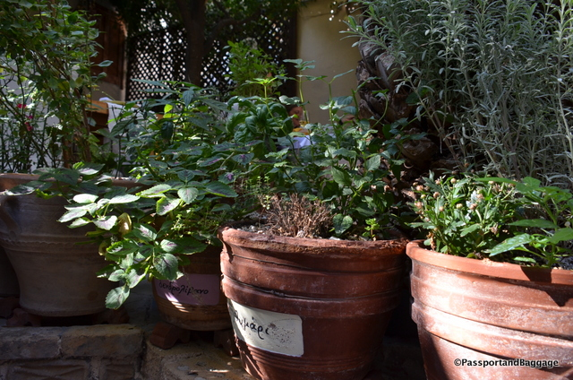 Fresh herbs, used in the restaurant are scattered in well marked pots, albeit, in Greek