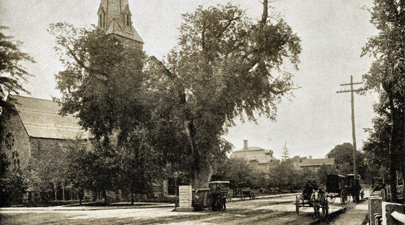washington-elm-cambridge-massachusetts-usa-about-1892