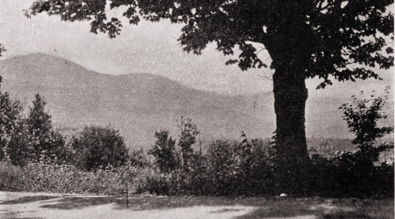 The tree by W. T. Starr about 1923