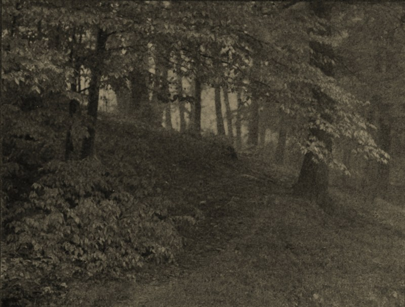 Woodland Mist by W. T. Knox about 1908