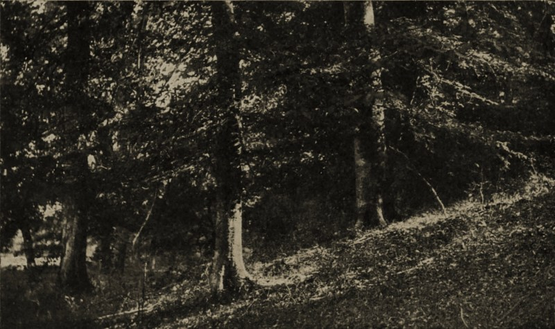Beeches by Kate Matthews about 1908