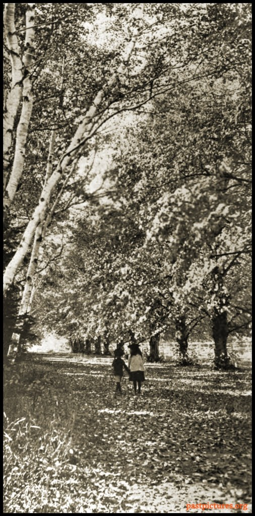 Fallen Leaves about 1905