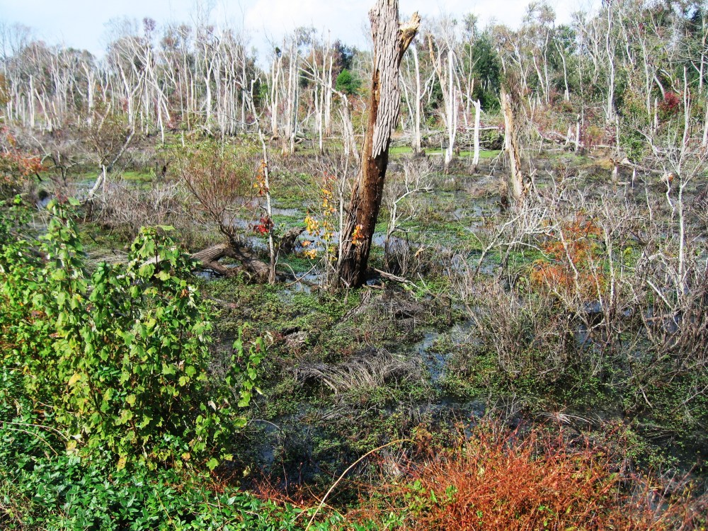 Dismal Swamp: Depends on One's Point of View  (1/3)