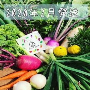 2002月旬彩野菜バスケット