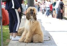 Un perro durante la celebración de Mascotalia