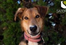 Uno de los perros que se encuentran en Modepran. Foto: Jeszie Kailani