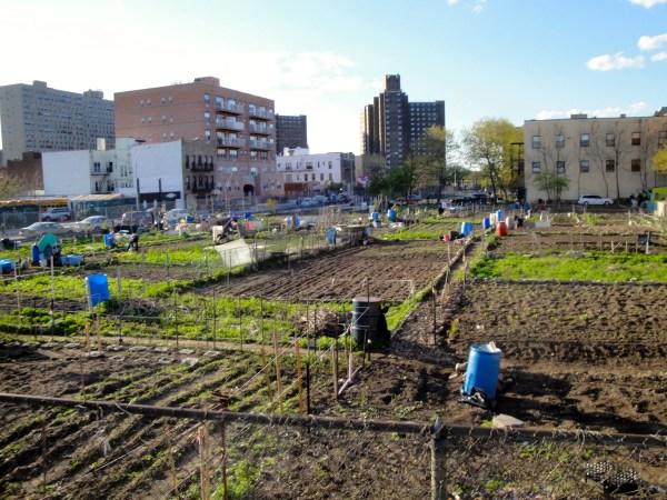 garden-new-york