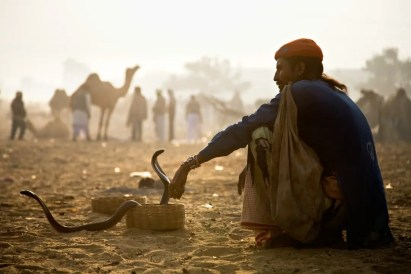 An Indian snake charmer with cobras