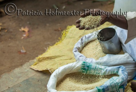 Grain of rice pouring from a black male hand into a sack of rice