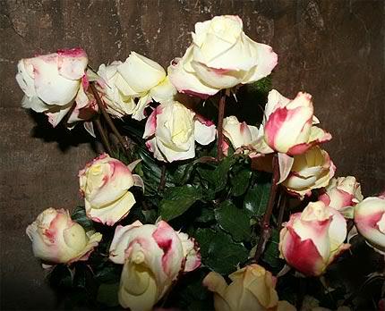 13 July: Viva Rosa Mystica!