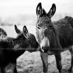 sometimes business donkeys are in staff, sometimes in management