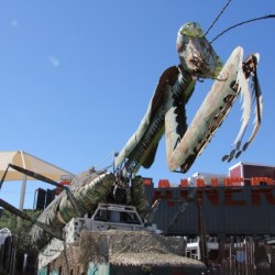 las-vegas-downtown-project-tony-hsieh-tour-container-park-praying-mantis