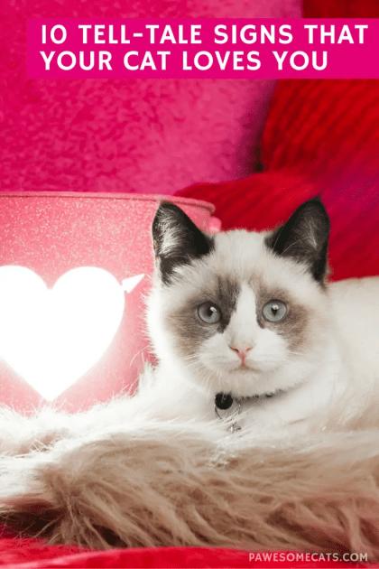 scabies in cat