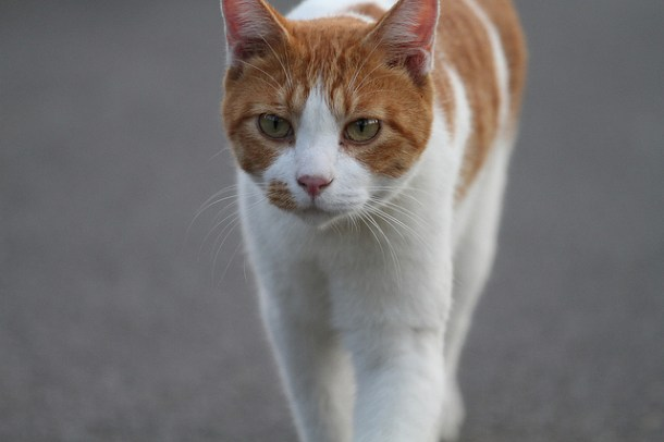 What To Use To Stop Cats From Spraying