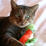How to Stop Your Cat Biting and Scratching During Play