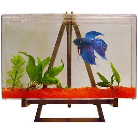 Easy maintenance fish tank betta fish bettas 4 ideas for Easiest fish to take care of