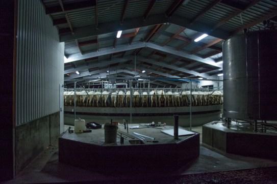 Lorsque je suis venue sur leur exploitation, les Bentham venaient d'inaugurer une toute nouvelle salle de traite de 90 places ! Un gain de temps et d'énergie ! - En savoir plus : http://paysansdavenir.com/le-coin-des-innovations-chevres-au-vert/